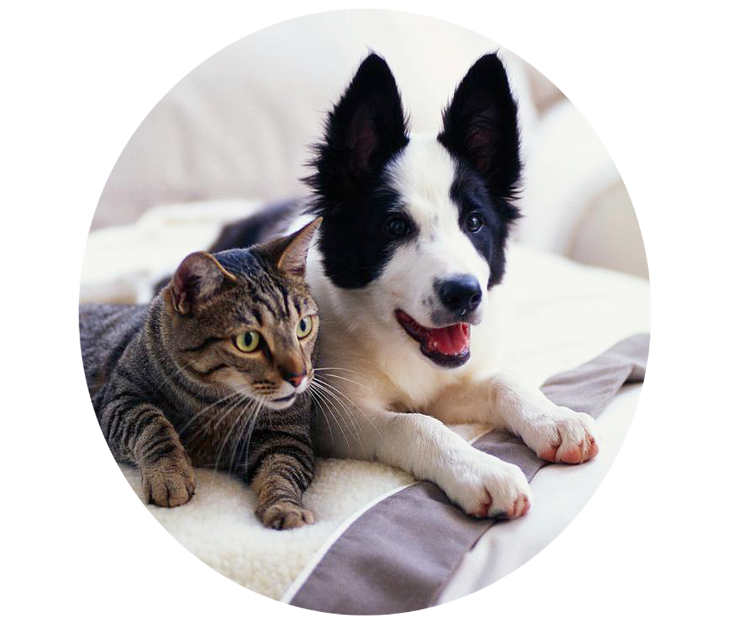 cat_and_dog13